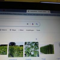 Gezocht gratis haagplanten liefst van iemand in Den -Haag