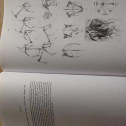 Boek Anatomie voor de kunstenaar