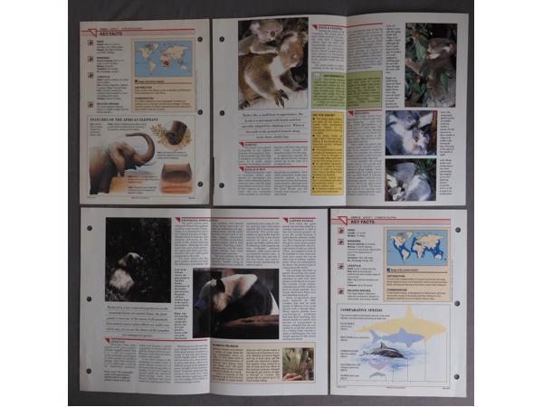 Dieren spulletjes (zoals posters en kaarten)